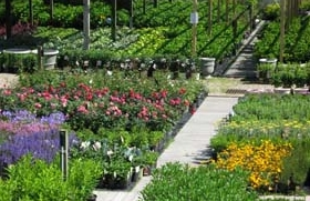Arrowhead Nursery Has A Complete Selection Of Products And Services For Your Landscape Garden Outdoor Living With Almost 30 Years Experience On